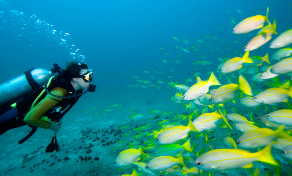 Best Time To Visit Andaman - Best Season to Visit in Andaman