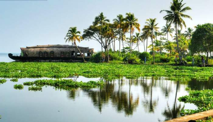 Things to Do in Kerala - Backwaters, Hills, Beaches, Activities